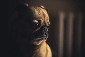 dog-690176_1280
