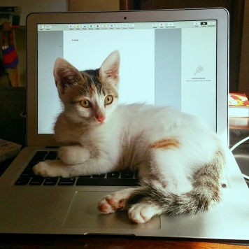 She used to love sitting on our laptops when she was young