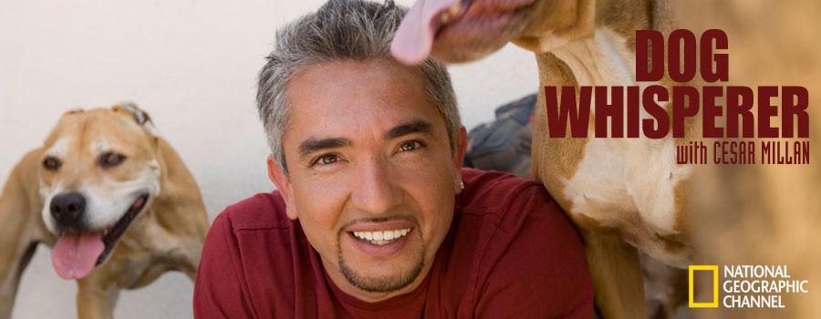 Cesar-Millan-the-dog-whisperer-25204454-900-350